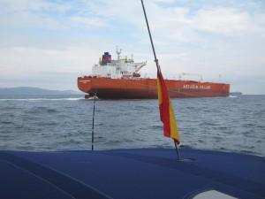 Гибралтар, рыбка держится судового хода.